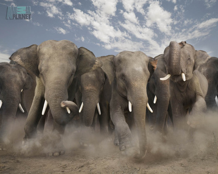 Elephants charging the gaps in HIV/AIDS theory, but all the HIV/AIDS proponents can see is the ivory of their billion dollar tusks